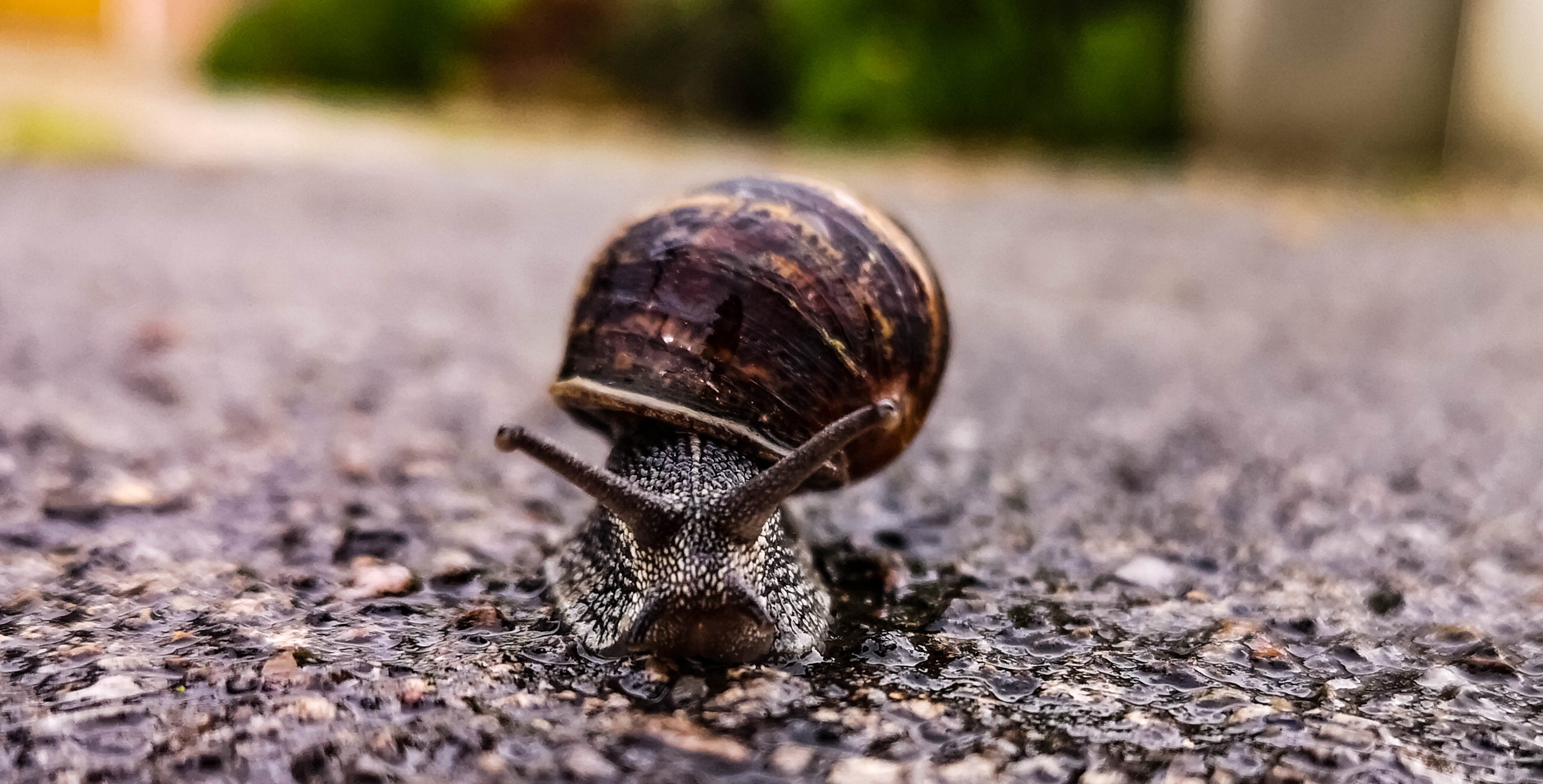Snail showing how slow processes become when using bad data